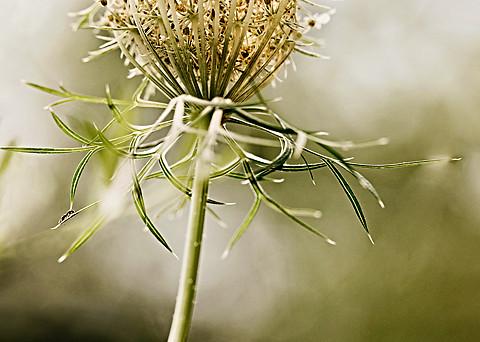 flower-9721 c.jpg