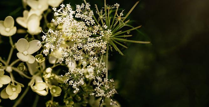 flower-9698 c.jpg