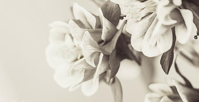 flower-0362-2 c.jpg