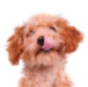 Pets_cut_1.jpg
