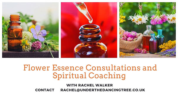 header for flower essence client documen