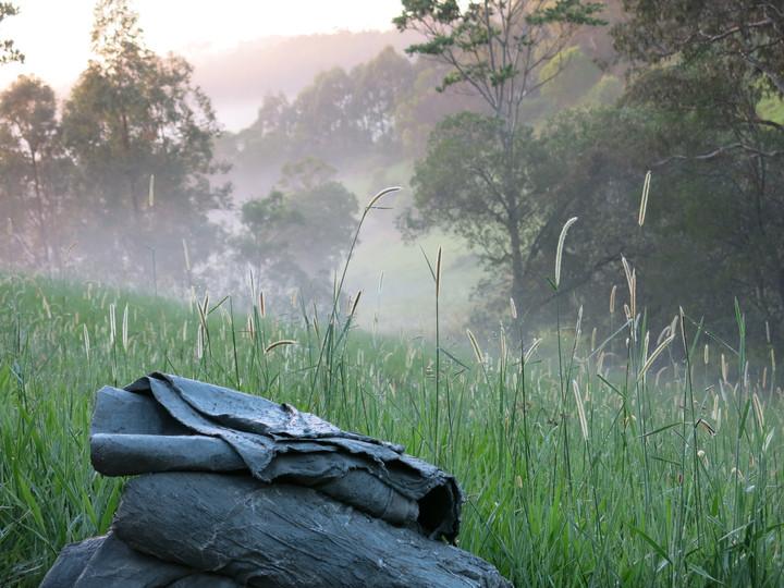 Cootharaba In-Situ, Series I, 2017, Digital photograph