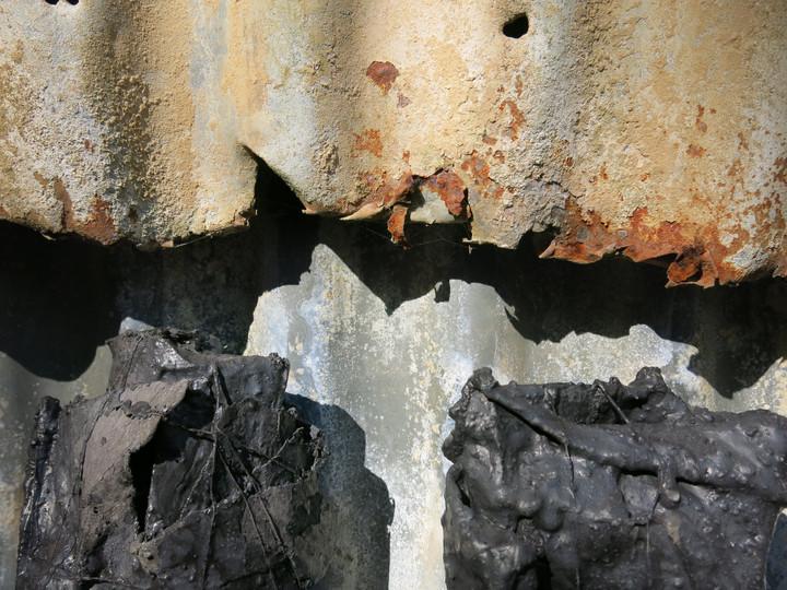 Cootharaba In-Situ, Series II, 2017, Digital photograph