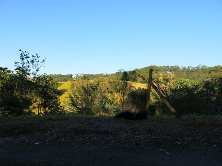 Cootharaba In-Situ, Series II, 2018, Digital photograph