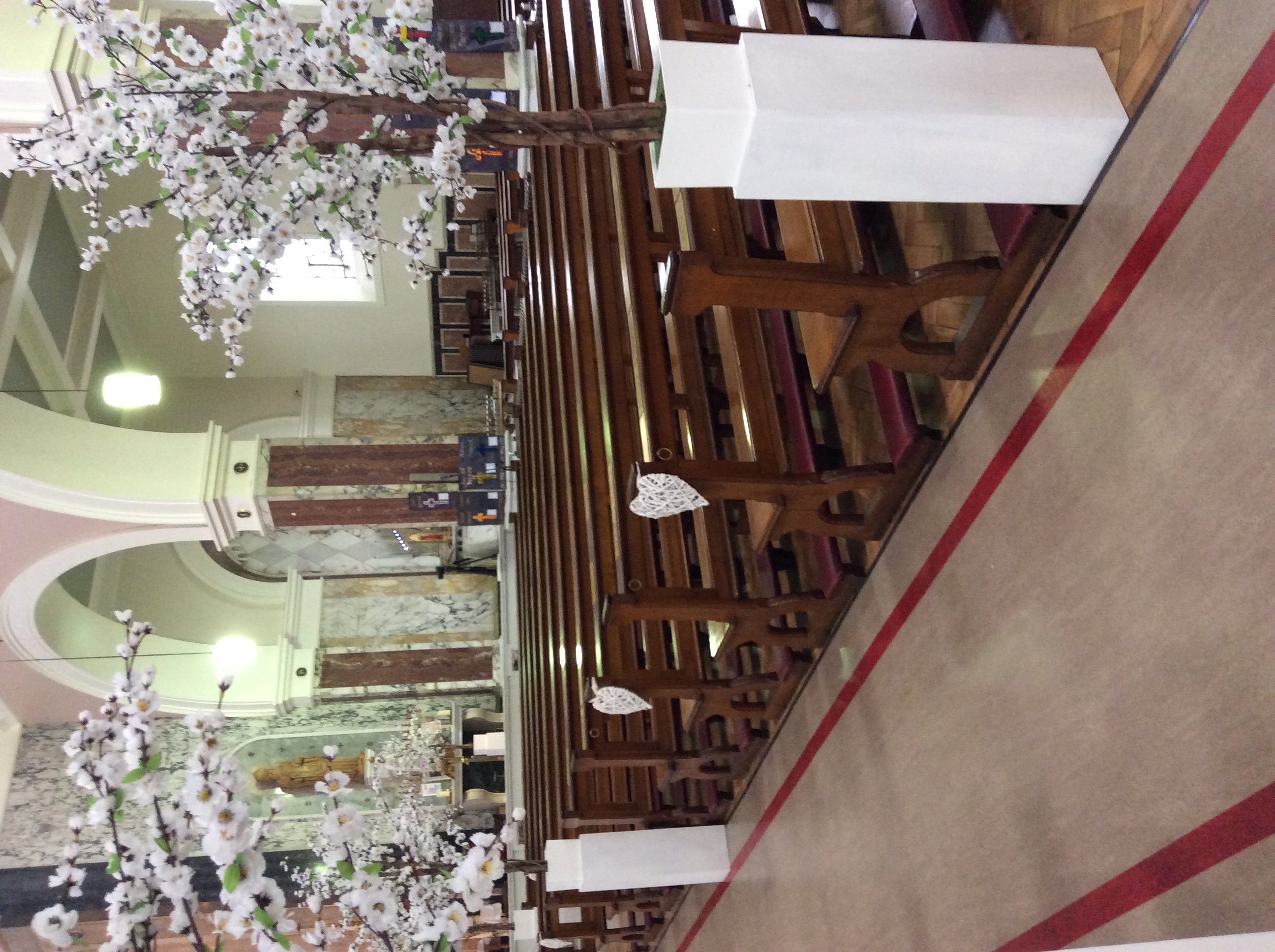 Cherry Blossom in Church