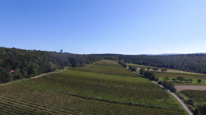 Ried Oberbuchgraben