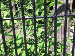 Cage of Secrets