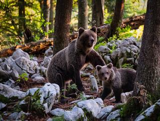 Small Bear to Great Bear