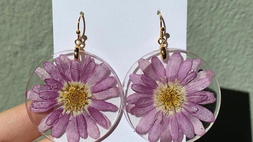 Purple Daisy Drops