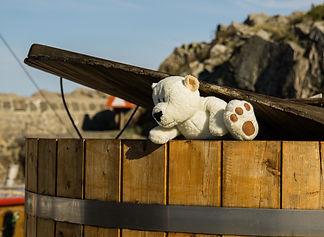 bear-1053838_1920.jpg