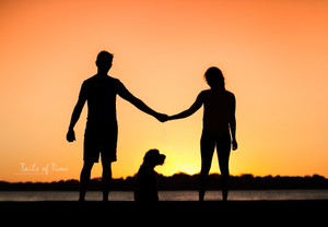 silhouette of family and their dog at bribie island pet photography session