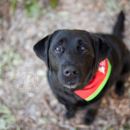Shade | Brisbane Pet Photography