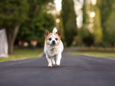 5 Tips from a Professional Pet Photographer to help improve your pet photos!