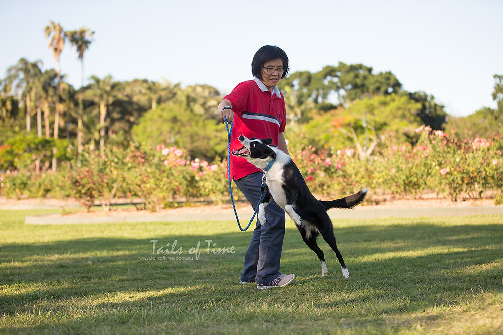 A session at New Farm Park in Brisbane by Tails of Time Pet Photography