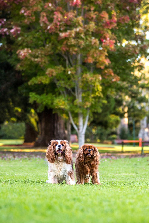 Toowoomba pet photographer autumn cavalier