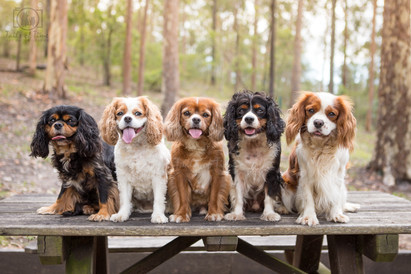 One Dog, Two Dogs, Three Dogs...More!