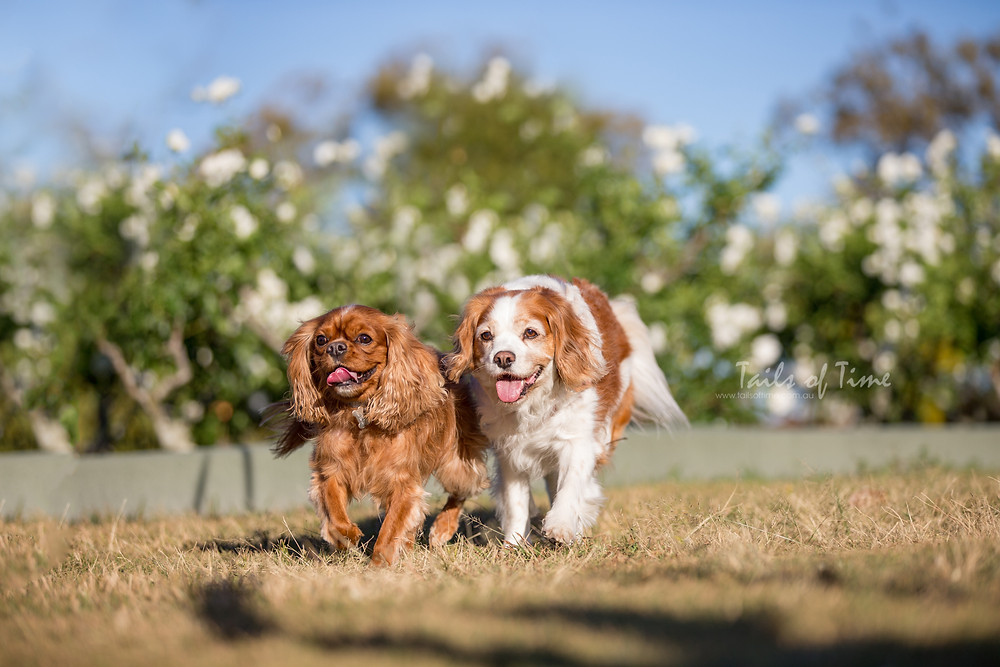 Why New Farm Park Makes For a Great Pet Photoshoot Location
