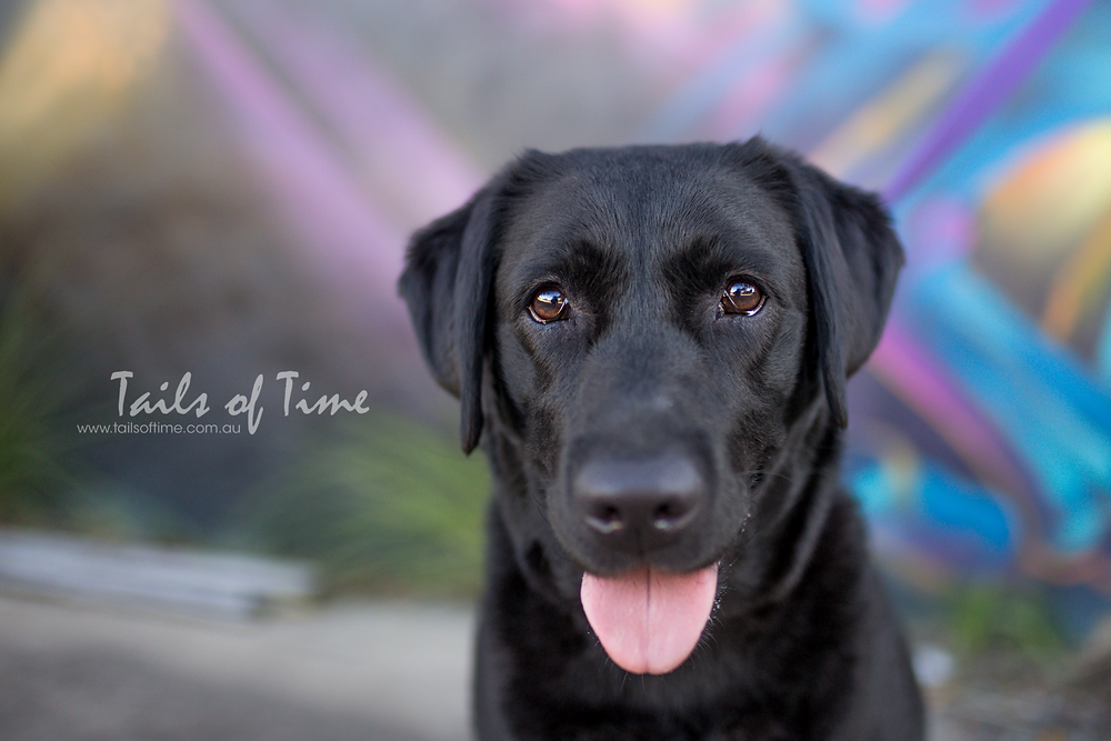 Pet Photography Brisbane - do you want to freeze time? Tails of Time Pet Photography offers just that!