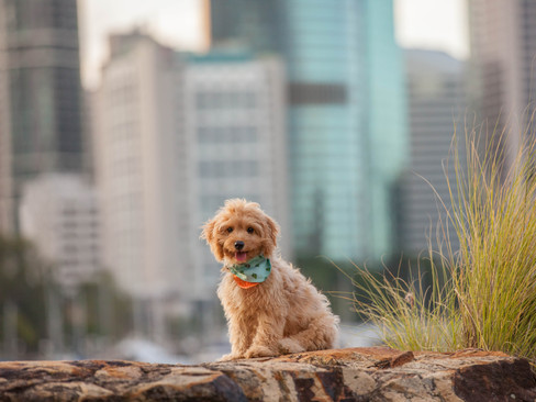 Kangaroo Point session with Arthur