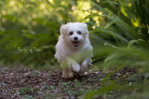 A session at home by Tails of Time Pet Photography