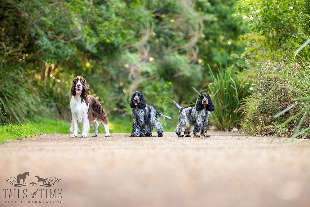 Three dogs pose for their photoshoot during a session for One Dog, Two Dogs, Three Dogs...More!