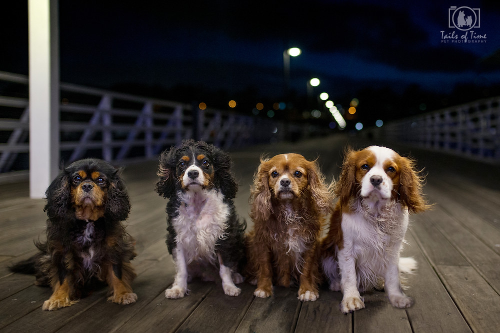 Pet Photography by Tails of Time