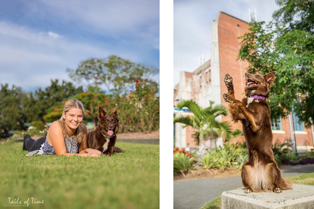 Kelpie at photoshoot new farm park