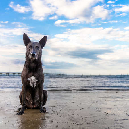Missy at Shorncliffe pier
