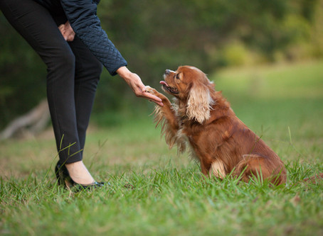 Commercial Dog Photography for Leave It // Indoor and Outdoor Dog photography