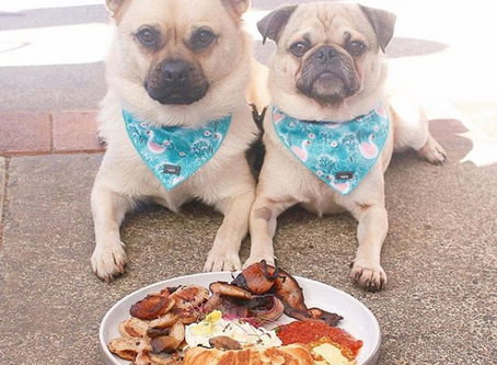 10 dog-friendly cafes to try in Brisbane this weekend!