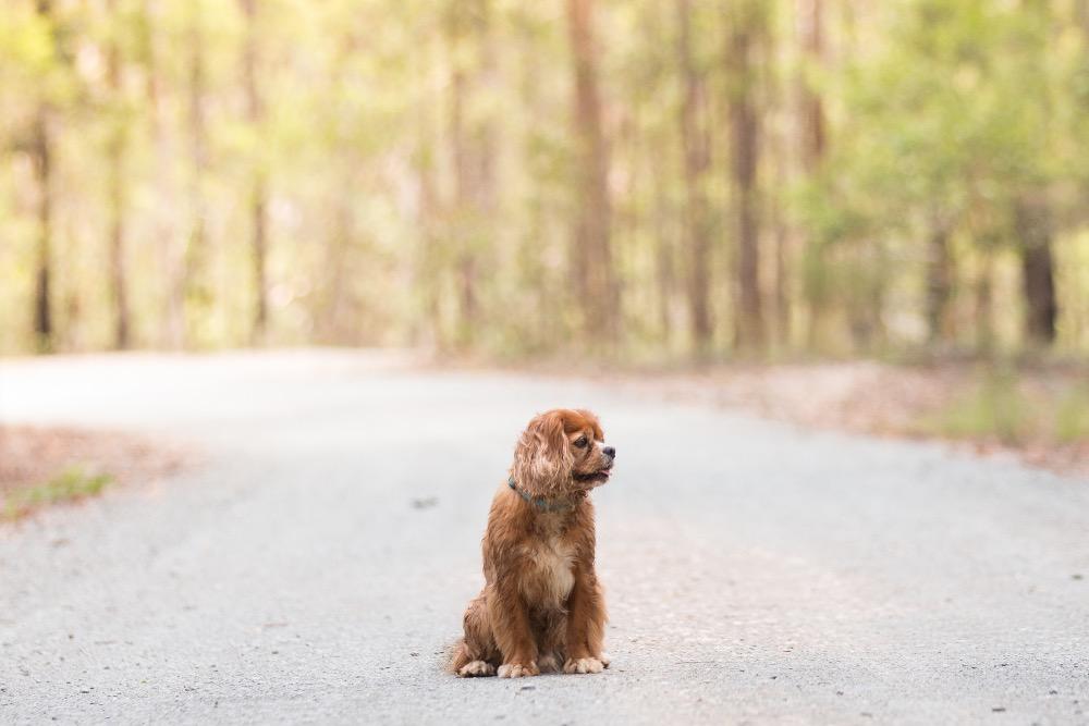 dog photos walking trail brisbane
