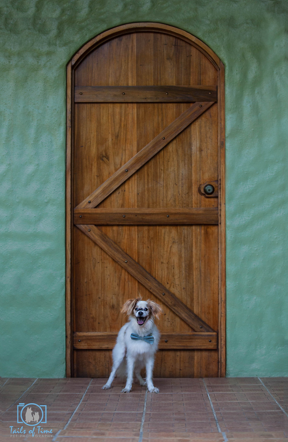 Tails of Time Pet Photography goes International to Costa Rica!