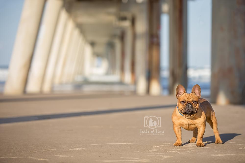 Award winning pet photographer Gold Coast