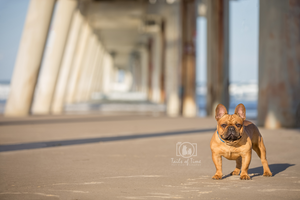 Award winning pet photographer Gold Coast