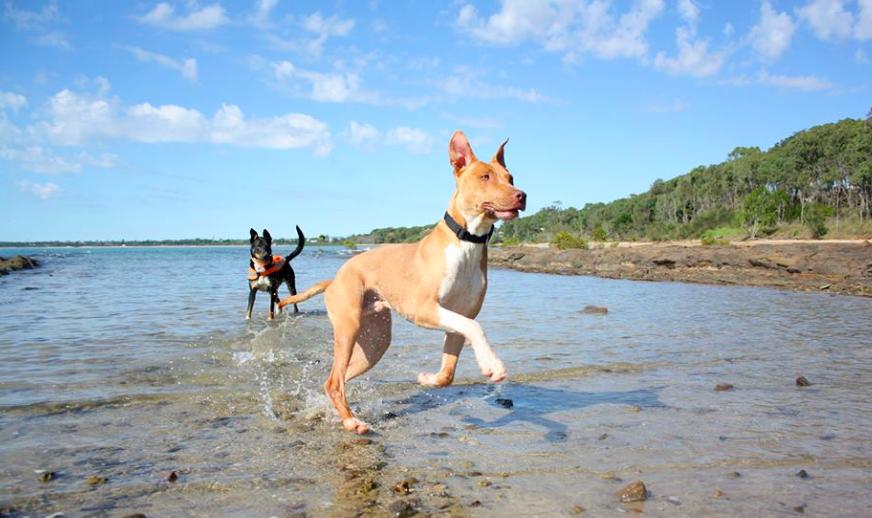 dog walker Brisbane daycare dogs