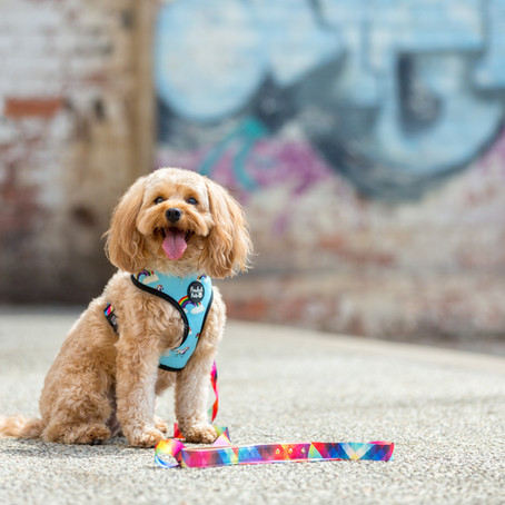 Commercial Pet Photographer  // Pawfect Pals