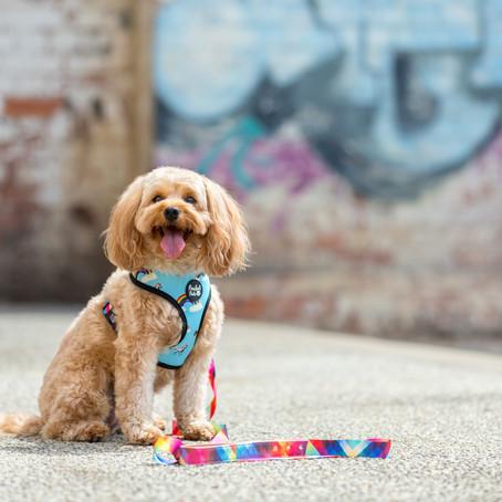 Commercial Pet Photographer  // Pawfect Pals