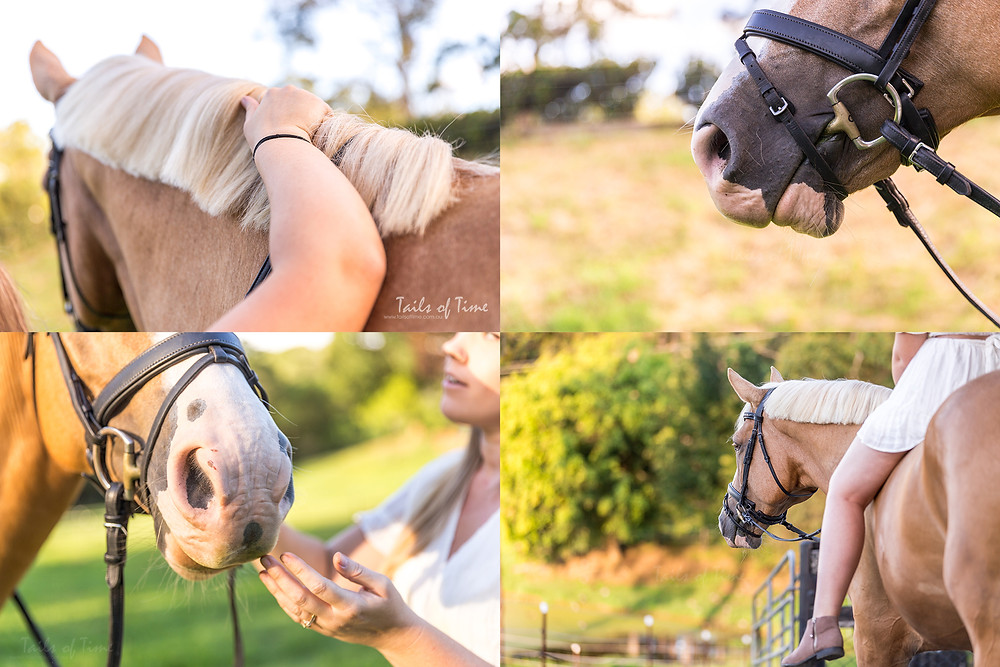 brisbane equine photographer capturing detail shots of a warmblood mare