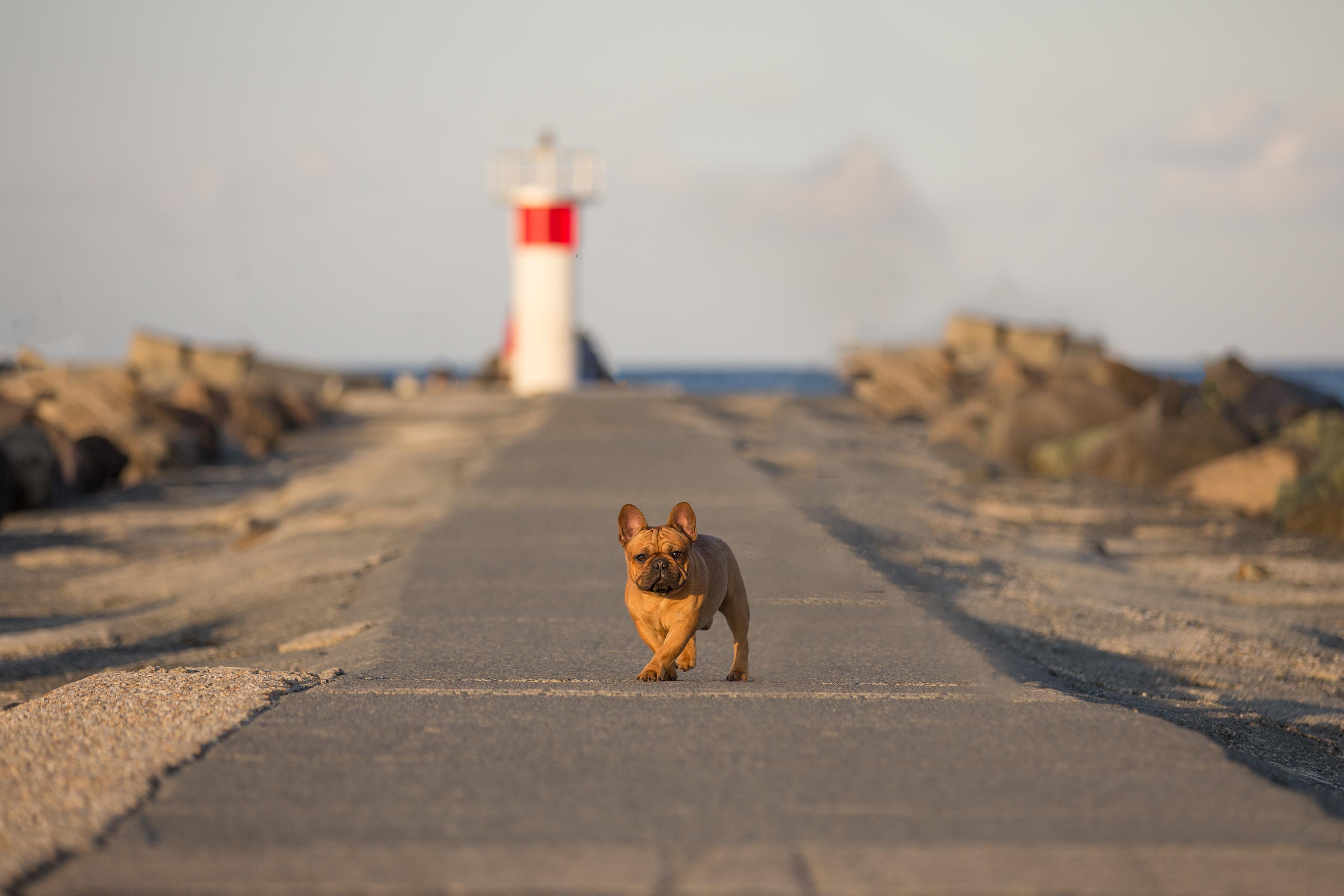 gold coast dog photoshoot