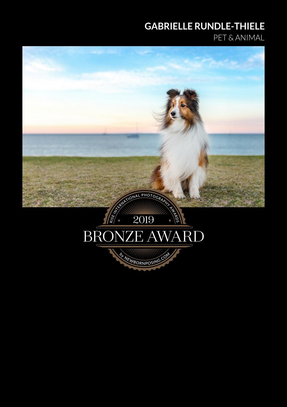 Tails of Time's Bronze award image // award winning pet photography
