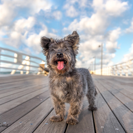 Sophie at Shorncliffe Pier