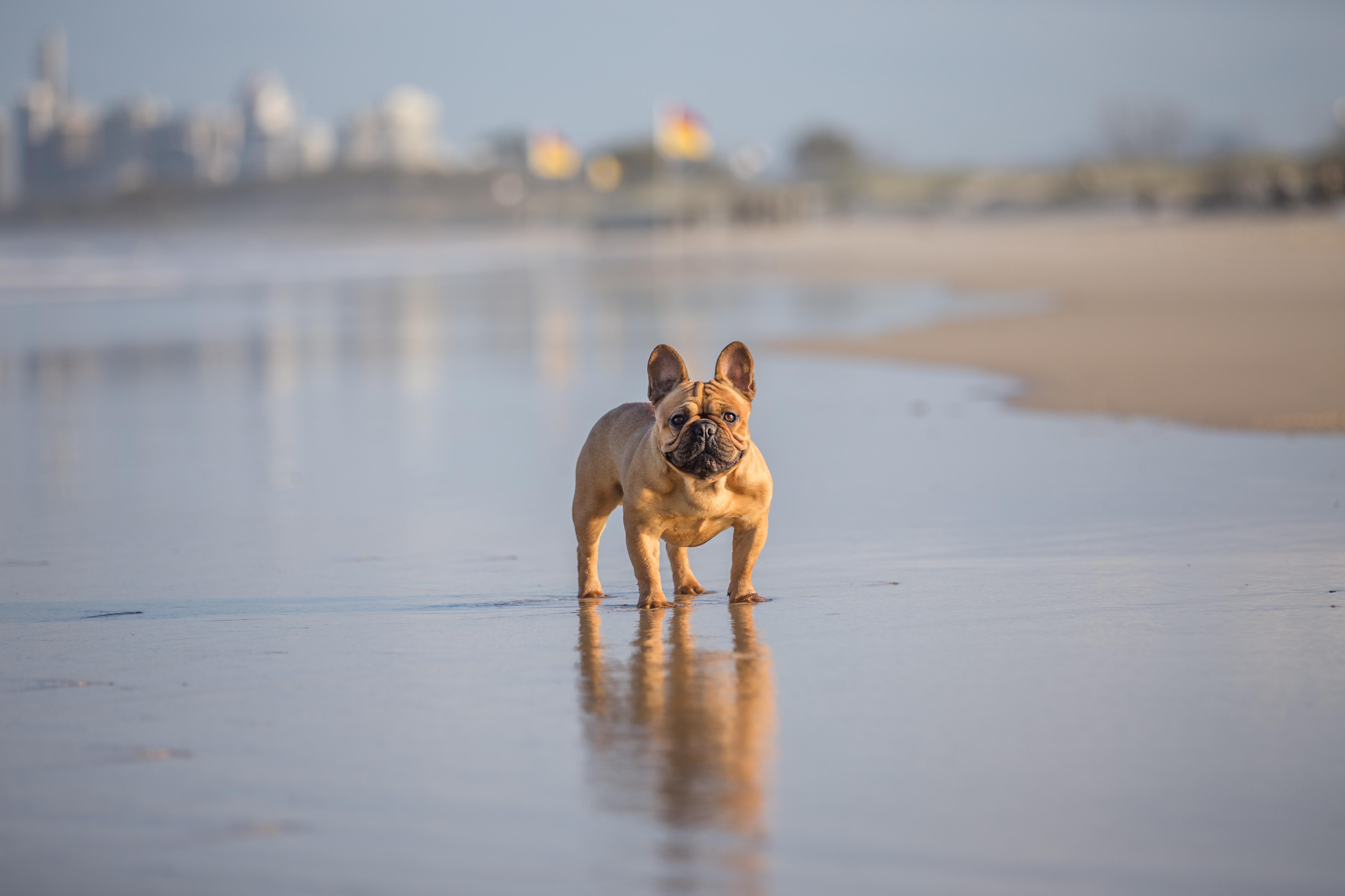 gold coast pet photos