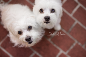 An In-home session by Tails of Time Pet Photography