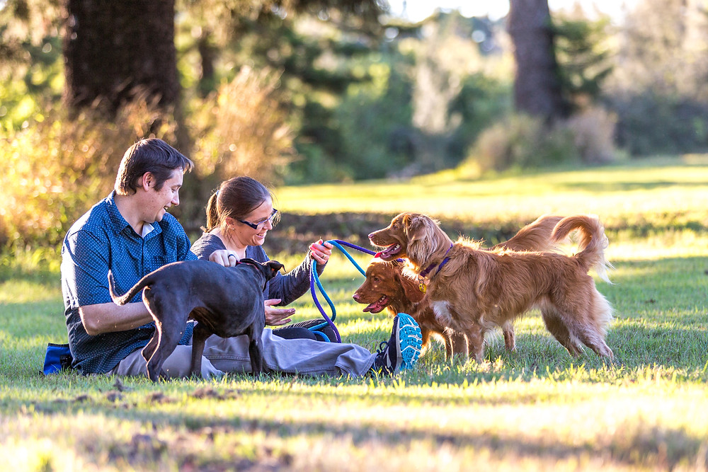 A Brisbane country-style photoshoot for families and pets
