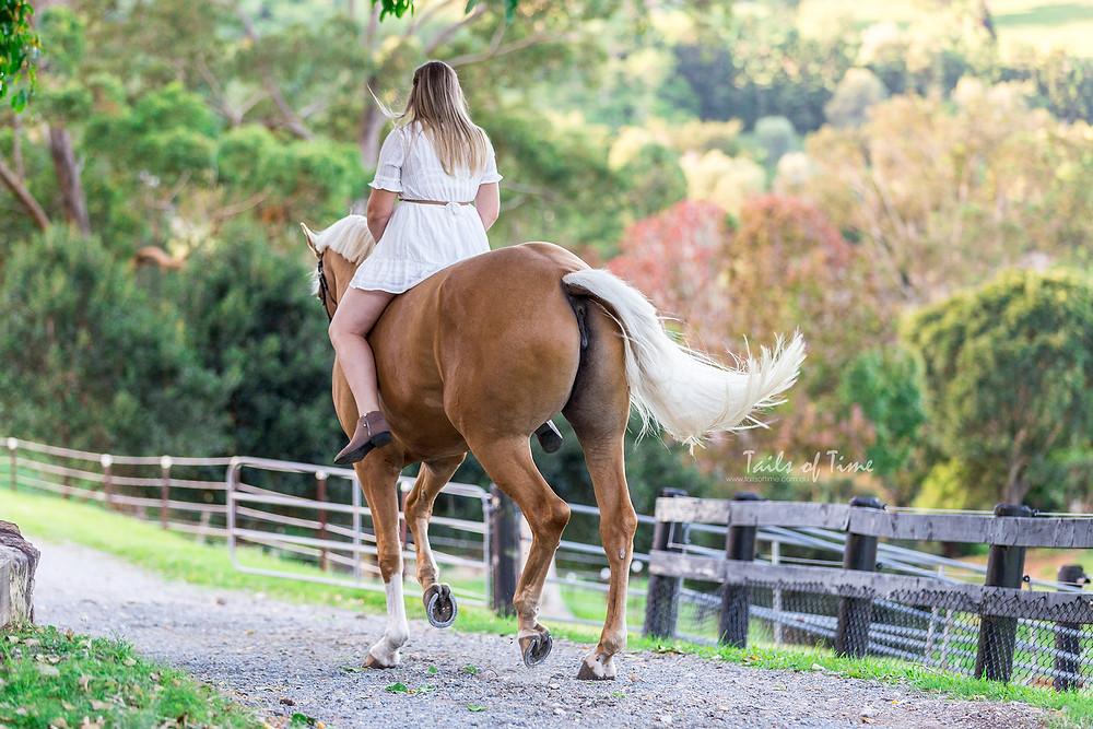 ridden shots of a warmblood mare on an autumn path