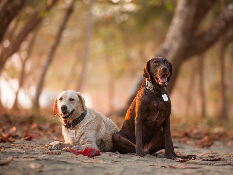 Bosco and Piccolo | Costa Rica | International Pet Photography