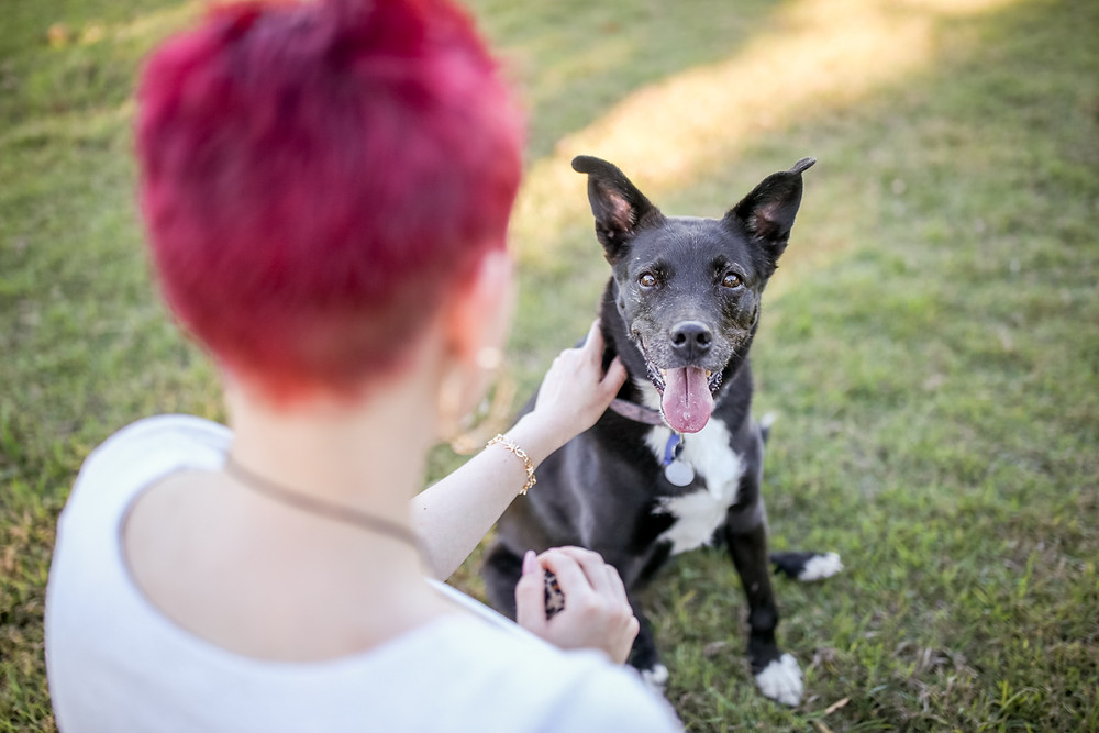 an owner and her black kelpie during her pet photography session
