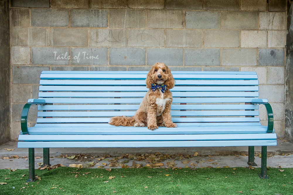 Why you should consider New Farm Park for your pet photography session.