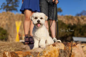 A session at Kangaroo Point in Brisbane by Tails of Time Pet Photography