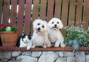 Cat and dog photography in Brisbane. A session at home by Tails of Time Pet Photography